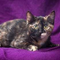 Ищет свою семью милейшее создание котёнок Триша, в Москве