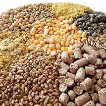 Продаем, пшеницу, овес, кукурузу, ячмень, семечку, горох, в Москве