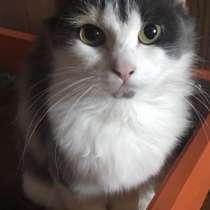 Кошка, в Кирове