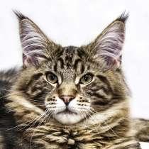 Кот для победителя, в Кубинке