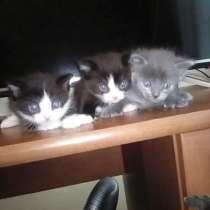 Три котенка Самцы, в Кемерове