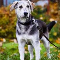 Добрая и общительная молодая собака-принцесса, в Санкт-Петербурге