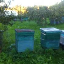 Продам пчелосемьи, в Москве
