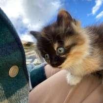 Котёнок, в Сургуте