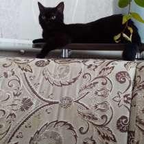 Кошка 4 месячная, в Каневской
