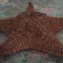 Чучело морской звезды, в г.Алматы