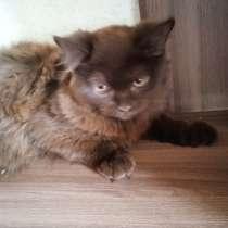 Кошки в дар !, в Пскове