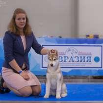 Щенки хаски, в Москве