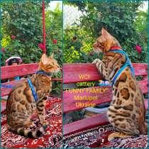 Бенгальские котята, шикарная кошечка, документы WCF, питомн, в г.Мариуполь