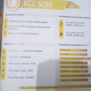 Семена кукурузы ксс5290, в Москве