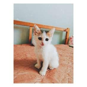 Отдам в хорошие руки котят), в Уфе