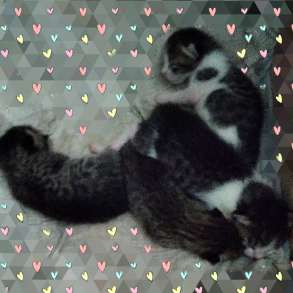 Отдам 4-х котят ДАРОМ!!!, в г.Минск