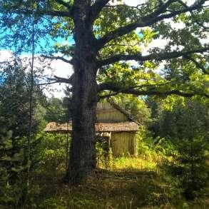 Шикарный земельный участок на сказочной лесной поляне, в Пскове