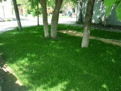 """Рулонный газон """"Эконом Городской&qu"""