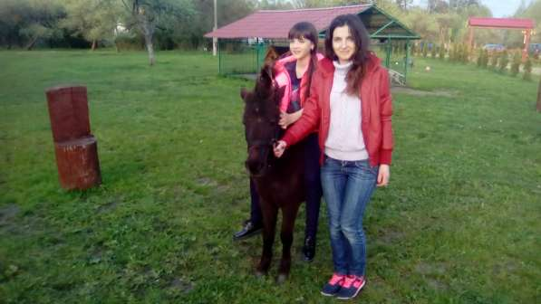 Верховая езда ребенка на пони. Полесск в Калининграде