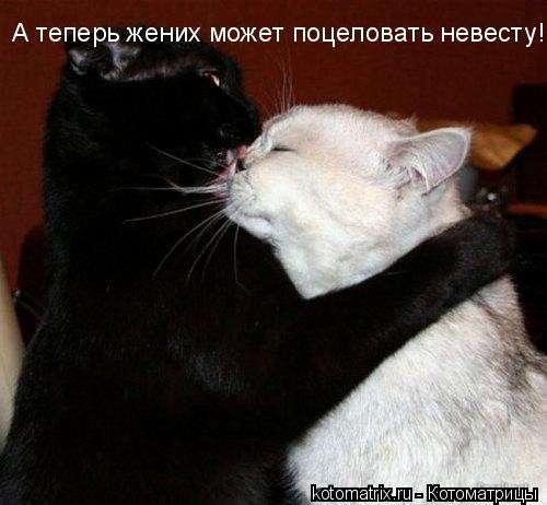 Отдам БЕСПЛАТНО, кота и кошку(очень умные, дрессированные)