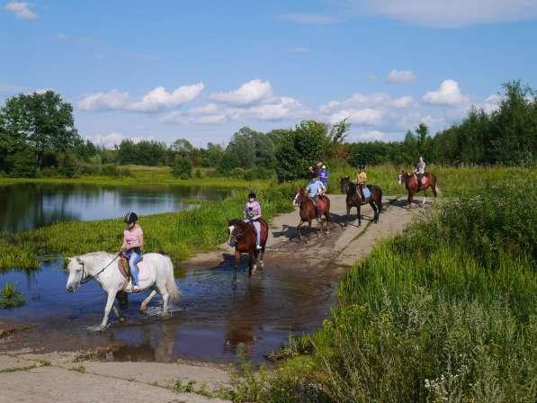 Конная прогулка бесплатно в Нижнем Новгороде фото 9