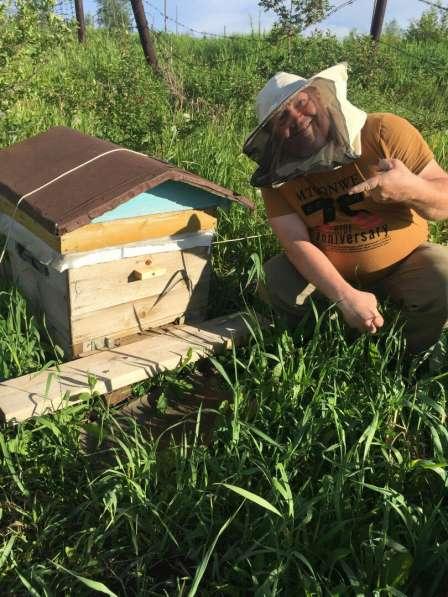 Продам Отличный мед Кемерово