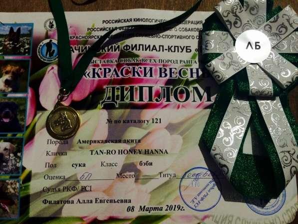 Американская Акита в Красноярске фото 4