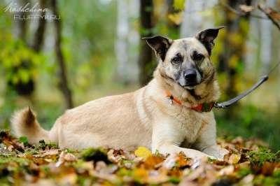 Отдам даром Безе - небольшая и очень добрая собачка