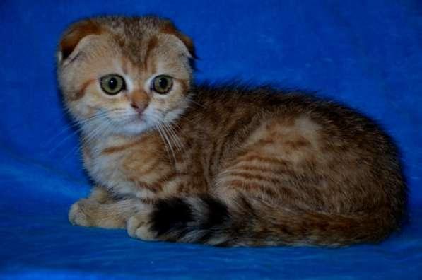 Породистые котята в Кисловодске