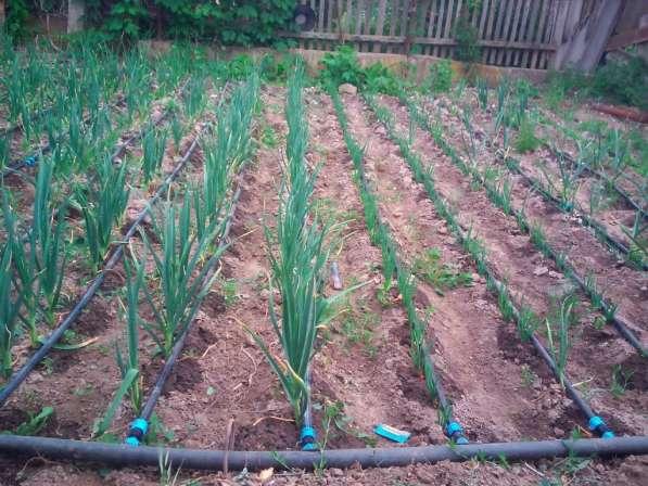 Капельный полив растений в Воронеже