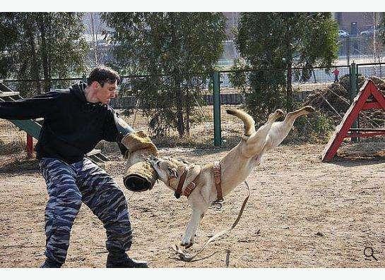 Дрессировка собак в вашем городе! в Москве фото 6