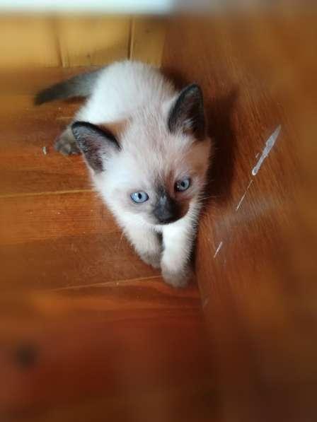 Подарю котят в фото 5