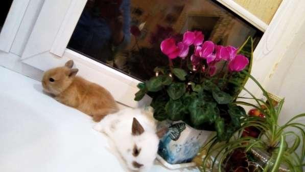 Продаются декоративные кролики в Уфе