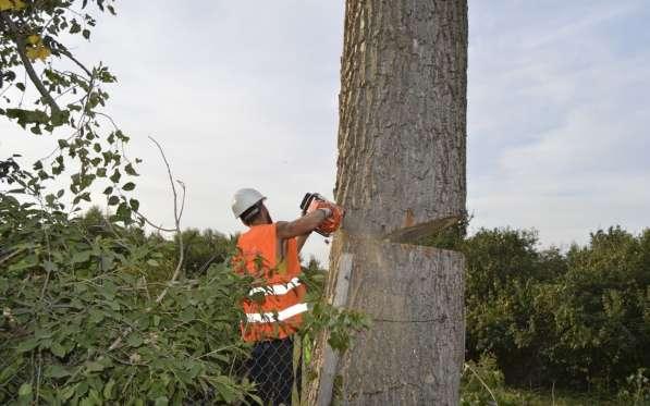 Удалим деревья(опасные, аварийные)