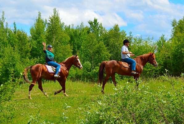 Конная прогулка бесплатно в Нижнем Новгороде фото 3