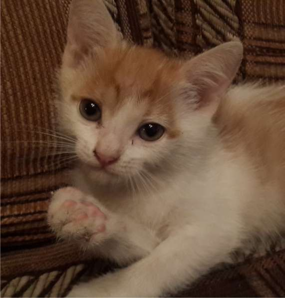 Отдам ласкового котика в добрые руки