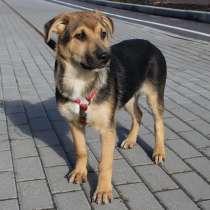 Спокойный умный щенок, в г.Санкт-Петербург
