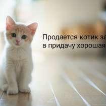 Продаю квартиру, в Екатеринбурге