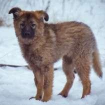 Отдам даром Мишель, крупная девочка-щенок в дар, в г.Москва