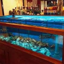 Изготовление торговых аквариумов для рыбы, раков, устриц, в Севастополе