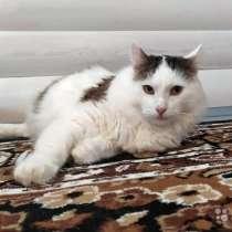 Добрейший молодой домашний котик Кирюша в дар, в г.Москва