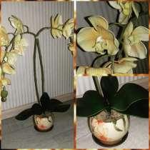 Орхидея -фаленопсис интерьерная композиция, в г.Улан-Удэ