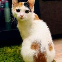 Отдам даром Чудесный трехцветный котенок Мышка в дар, в г.Москва