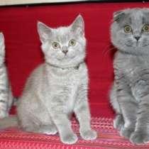шикарные котята!, в Санкт-Петербурге