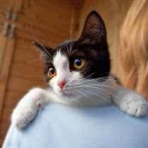 Благородная Яшма, бесподобный домашний котенок в добрые руки, в г.Москва