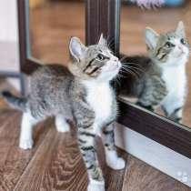 Полосатый позитив, чудесный домашний котенок Пайпер, в г.Москва