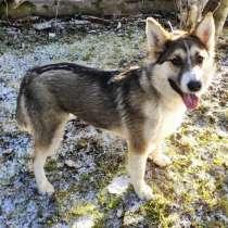 Ищет дом активная, красивая, ласковая собака, в г.Санкт-Петербург