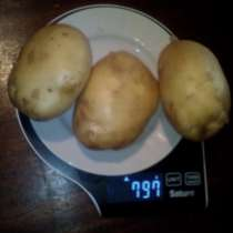 Купим картофель 20 до 5000 тонн, в Москве