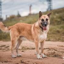 Верный друг и охранник Гром, молодой активный пес, в г.Москва