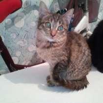 Отдам котенка в добрые руки, в Красноярске