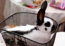 Кролики-Строкачи, Словакия. Куры Брама, в г.Одесса