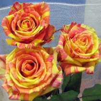 Продажа кустов роз и садовых деревьев, в г.Черновцы