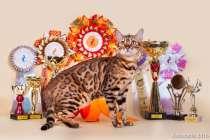 Бенгальские котята из профессионального питомника OutletGold, в Казани