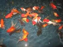 Продаж акваріумістика, в г.Луцк